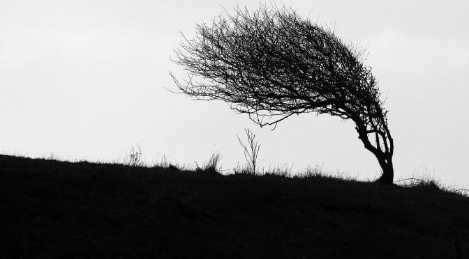 windswept-484796_1280