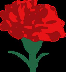 carnation-cropped